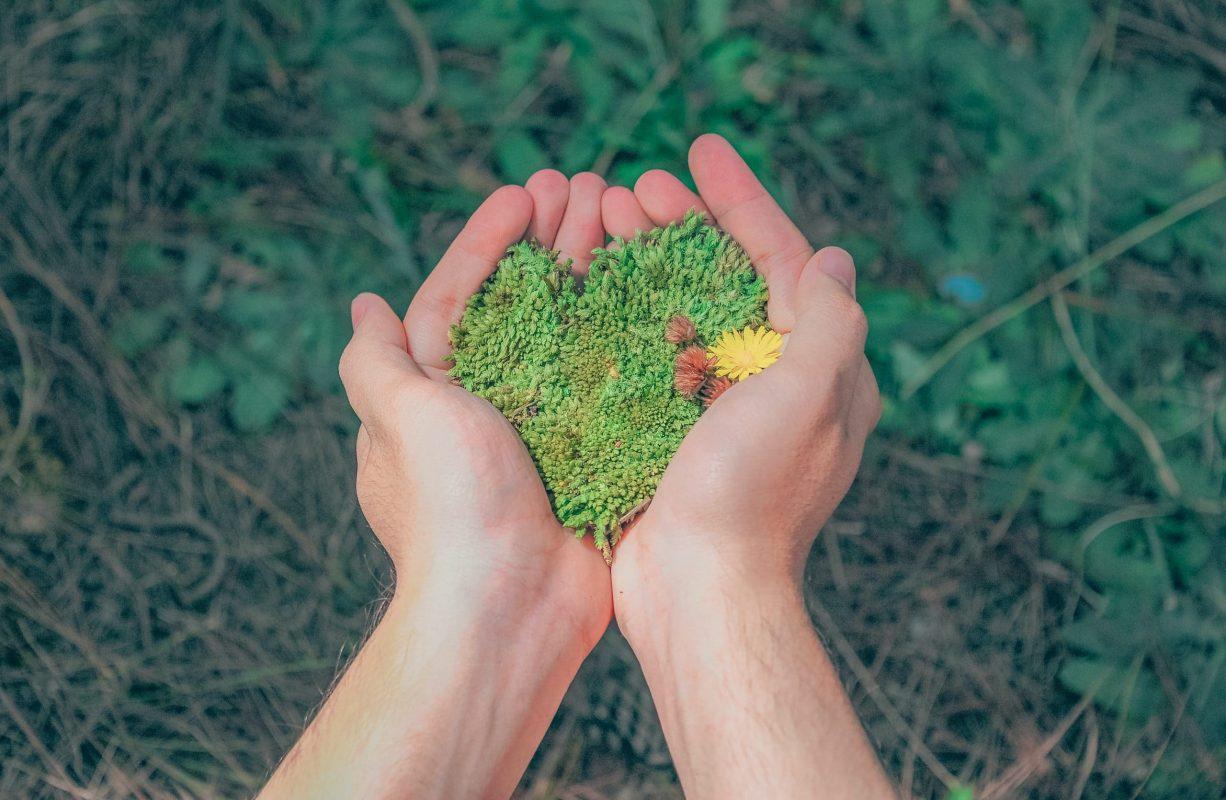 Métier vert : quelle formation, quelle orientation, quelle filière professionnelle pour les emplois autour de l'environnement ?